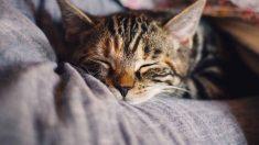 Tips sobre la temperatura de tu gato