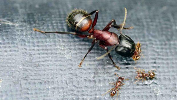 Importancia de los insectos