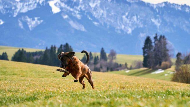 Perro en la montaña