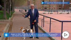 Jesús Sánchez Martos: «Las mascotas no nos contagian el coronavirus»