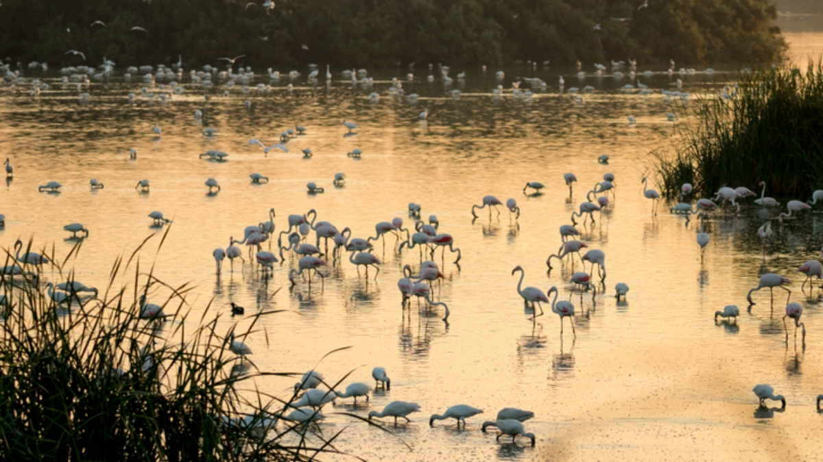 El Parque Nacional de Doñana se protege contra el coronavirus