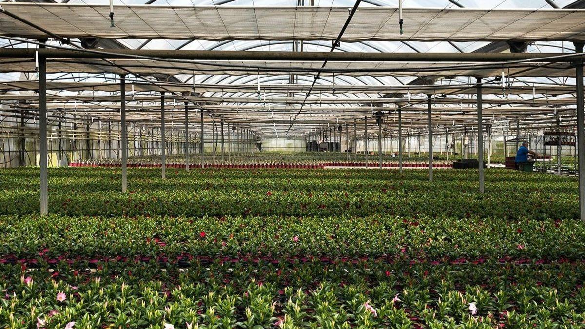 El sector agrícola en Almería continúa trabajando con normalidad