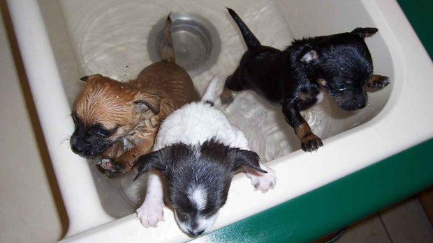 Cachorros se bañan