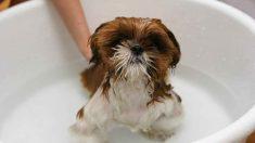 Frecuencia de los baños de tu cachorro
