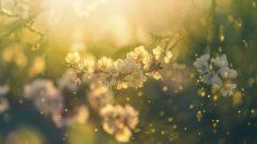 Los mejores refranes para que puedas celebrar la llegada de la primavera