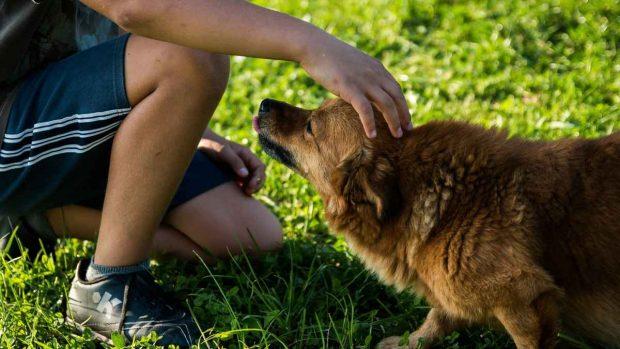 Convivencia entre hijo y perro