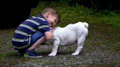 Relación entre mi hijo y el perro