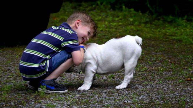 Convivencia hijo y perro