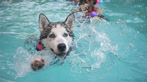 Perro y agua de las piscinas