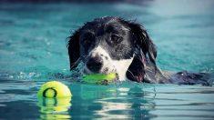 Tu mascota no debe beber agua piscina