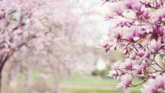 Equinoccio de primavera: ¿Qué es y qué ocurre?