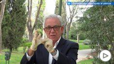 Jesús Sánchez Martos explica cómo se deben quitar los guantes para evitar el contagio del coronavirus
