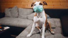 Los chinos, sus mascotas y el coronavirus