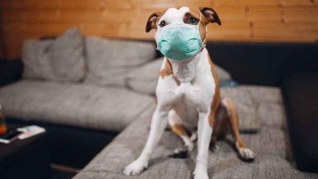 Mascotas chinos coronavirus