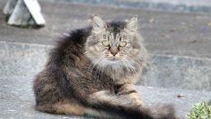 Prevención y tratamiento epilepsia en gatos