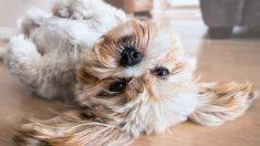 Mascotas con dueño hospitalizado por coronavirus