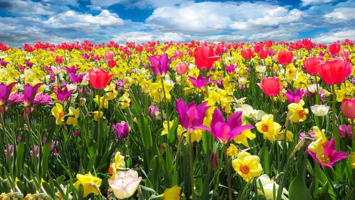 Astenia primaveral cómo combatirla