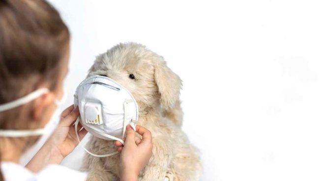 Coronavirus y tu mascota