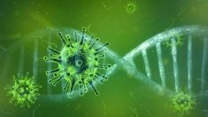 El coronavirus en nuestro sistema inmune
