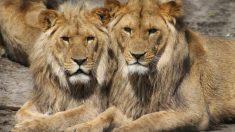 La vida íntima de los animales salvajes