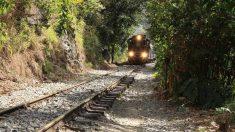 Tips para viajar a la selva amazónica