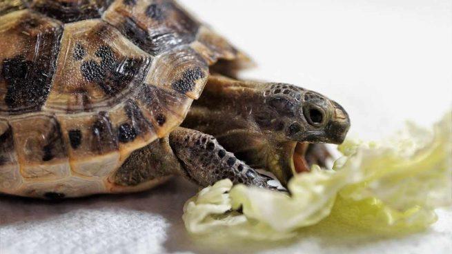 ¿Qué debe comer una tortuga?