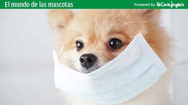 Cuidados de tu mascota durante la cuarentena del coronavirus