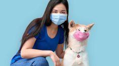 Cómo actúa el coronavirus en perros