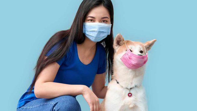 Duración del coronavirus en perros