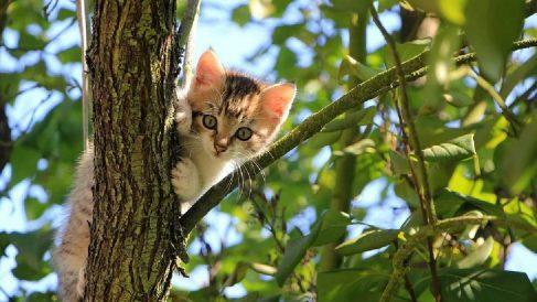 Imagen de archivo de un gato subido a un árbol. Foto: Pixabay