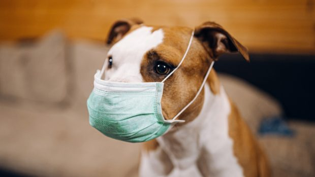 Perro y coronavirus