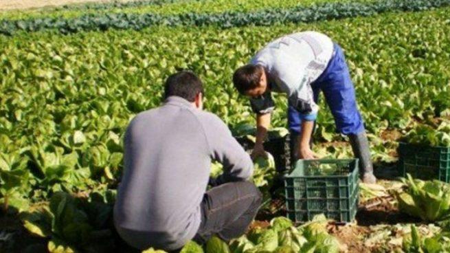 Europa impulsa la reutilización del agua residual para riego agrícola