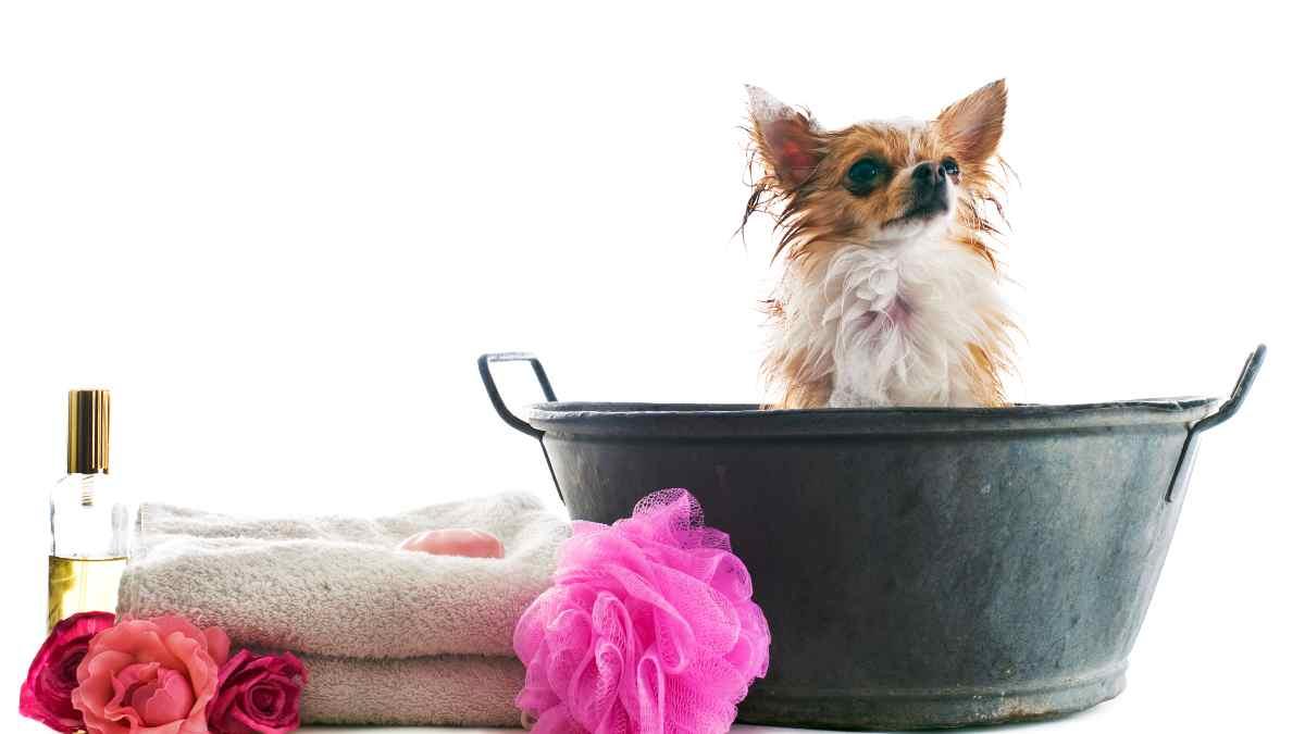 ¿Es bueno aplicar perfumes a tu cachorro?