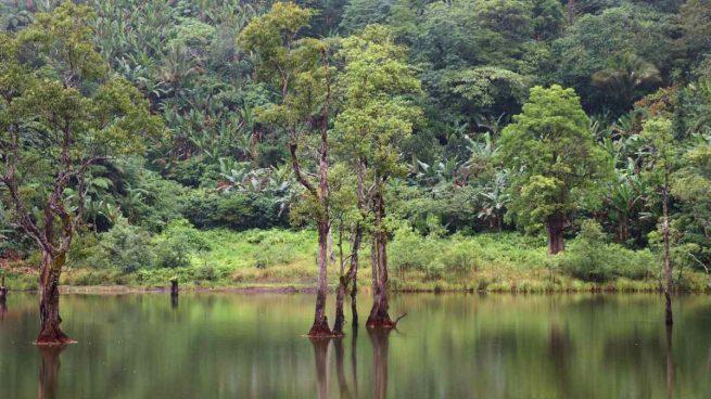 Sobrevivir en la selva entre animales
