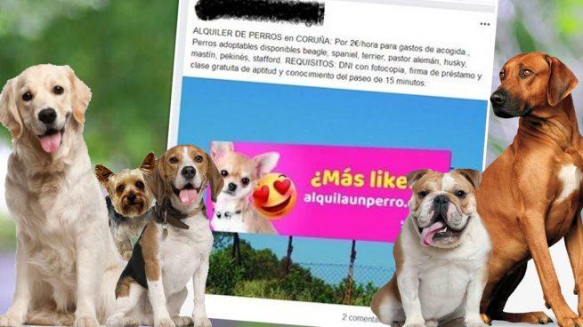 Denunciado un hombre por alquilar perros para pasearlos en La Coruña durante el estado de alarma
