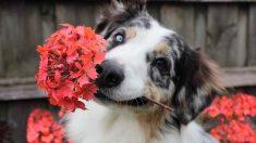 Cómo evitar que el perro coma en el jardín