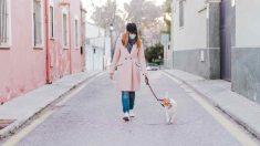 Limpieza mascotas, prevenir el coronavirus
