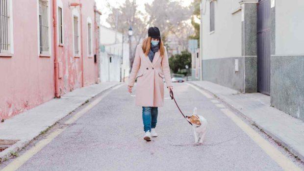Desinfectar patas mascotas