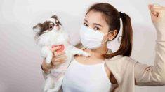Cuarentena coronavirus con tu perro