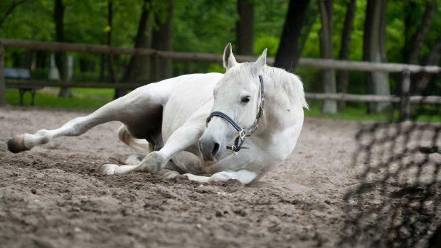 Enfermedades caballo