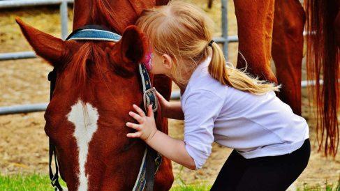 Clases de terapias con caballos