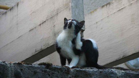 Piel del gato: sarna