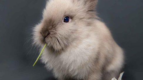 Conejo doméstico y juegos