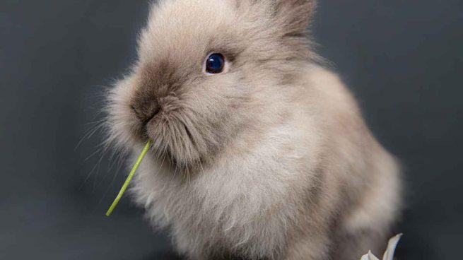 Jugar con tu conejo doméstico