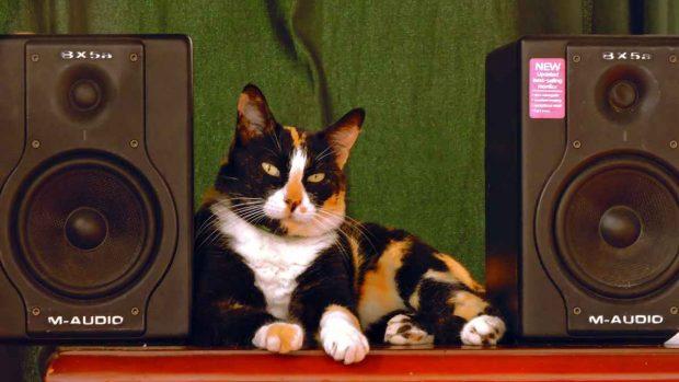 Música sobre gatos