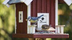 Semillas para pájaros domésticos