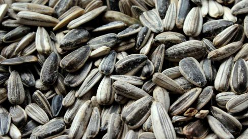 Riesgos de comer muchas semillas de girasol