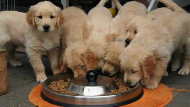 Alimentos cachorros