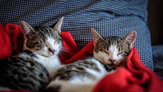 Mascotas y salud emocional