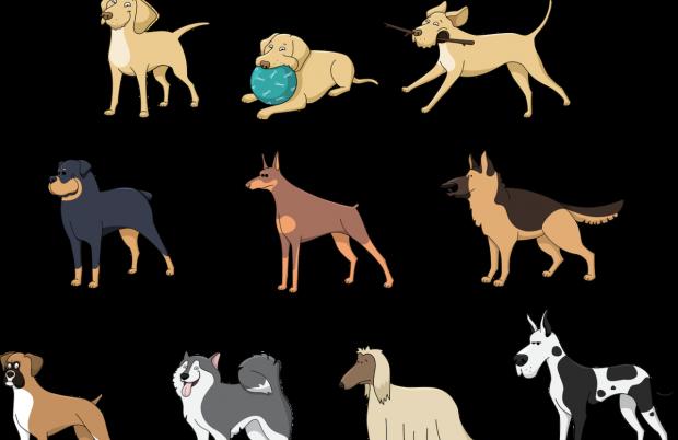 Muchas razas de perros